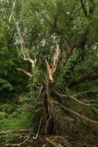 A tó körüli erdőkben nincs fakitermelés és az élővilág védelme érdekében a holtfák is helyben maradnak