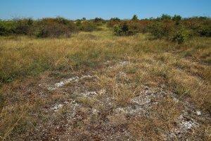 Részlet a fennsík egyik nyílt dolomitsziklagyepéről