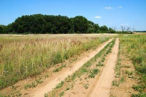 A védett terület körül található, magasabban fekvő szántóföldek erősen homokosak és szárazak
